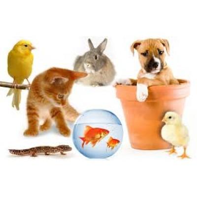 Pet Items