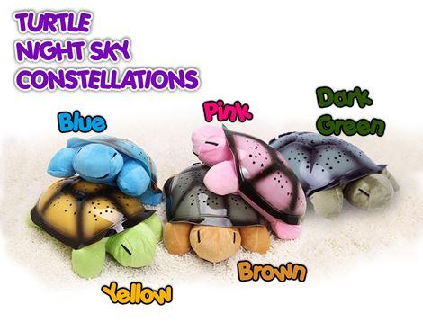 turtle4.jpg